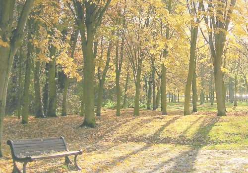 An autumn parkland with trees and a bench at the front of the scene. All the leaves are yellow and falling off the trees