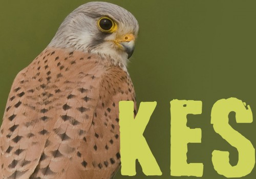 Kes by the Theatre Royal Summer School Thursday 1 - Saturday 3 September 2016